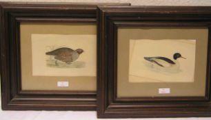 Satz von vier kolorierten Feder-Lithographien mit verschiedenen Vogeldarstellungen, ca.14,5 x