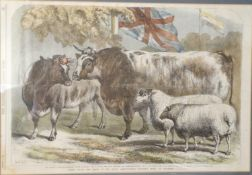 A 19th century engraving, Prize Cattle and Sheep at the Royal Agricultural Society Show at