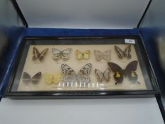 Framed and glazed taxidermy study of exotic butterflies, approx 47cm x 25cm