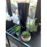Lot de 3 plantes déco & Vase (F)