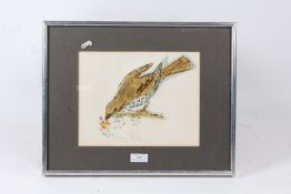 Three watercolour and charcoal bird studies, Nightingale, Song Thrush, Dunnock or Hedge Sparrow,
