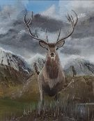 OIL - STAG
