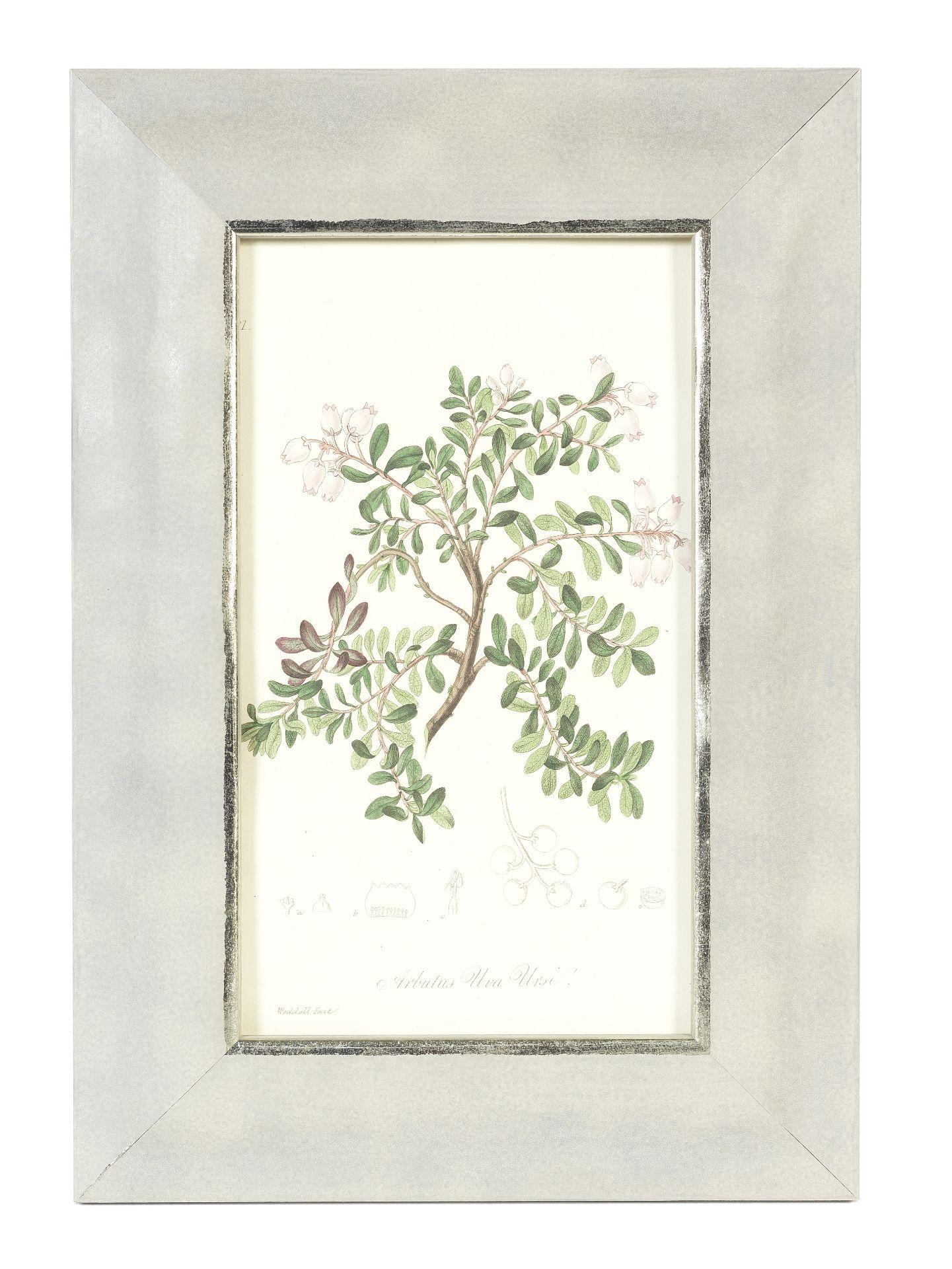 Los 192 - A set of twenty-four framed botanical plates (24)