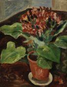 Augustus John O.M., R.A. (British, 1878-1961) A Cineraria in a Pot on a Table 46 x 36 cm. (18 1/8...