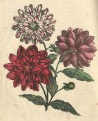 WHITTOCK (NATHANIEL) The Art of Drawing and Colouring from Nature, Flowers, Fruit and Shells... A...