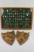 Large Collection of Dance Medals, To include Enamel examples, Enclosed in a Display case and