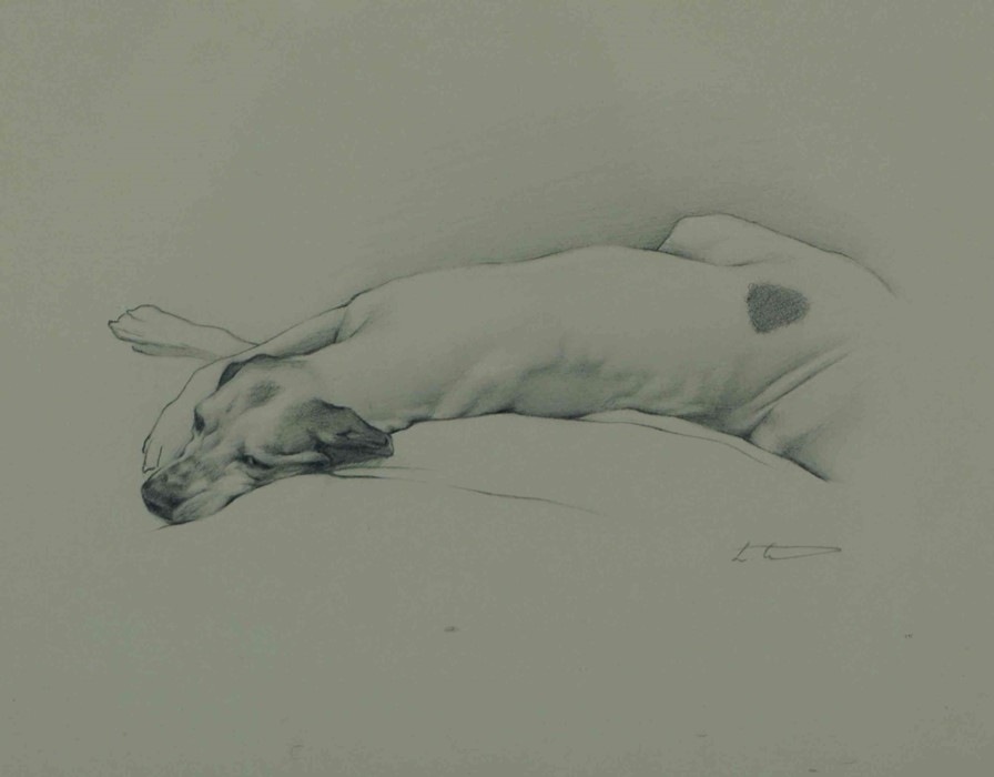 """Laura Cullen (Irish, B.1997) """"English Pointer"""", graphite, signed to lower right, 20cm x 25cm (Framed"""