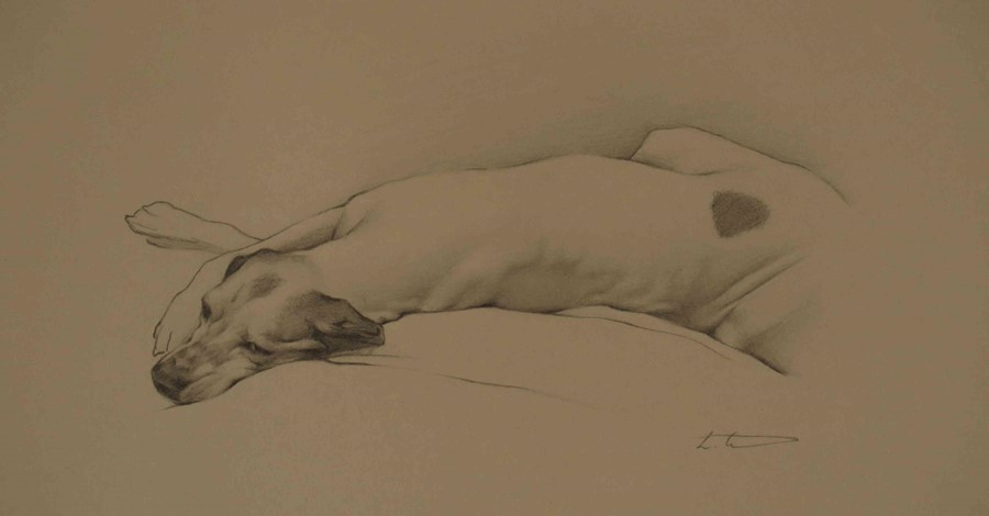 """Laura Cullen (Irish, B.1997) """"English Pointer"""", graphite, signed to lower right, 20cm x 25cm (Framed - Image 4 of 4"""