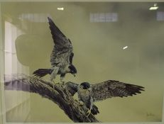 """""""Birds of Prey"""" Signed Limited Edition Print, Signed indistinctly in Pencil, No 148 of 300, 46cm x"""