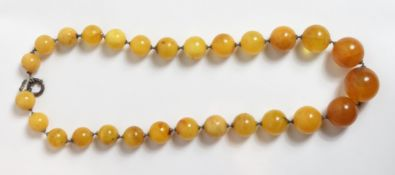 A graduated row of amber beads, the twenty seven round beads of approximately 1.5 cm - 2.5 cm