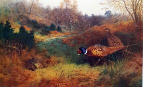 After Archibald Thorburn Pair colour prints of pheasants in landscape (2)