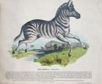 """[Whymper] """"Thirty Plates of Illustrated Natural History with a Short Description Annexed to Each"""