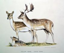 Kenneth Bailey Watercolours Fallow deer and New Forest ponies, both signed, both 33 x 46cm