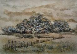 Trudi Finch Watercolour Woodland scene, signed lower right, 25.5 x 36cm