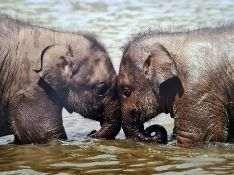 Large canvas print of baby elephants and two botanical canvas prints(3)