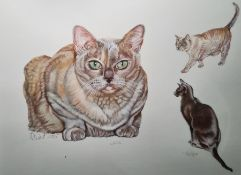 ? Dent Watercolour drawing Study of three cats, signed and dated 2005, 34.5cm x 46cm