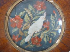 19th century circular woolwork embroidery depicting parrot amongst red hibiscus, in circular
