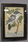 (XIX-XX). Eastern study of an exotic bird on a branch, unsigned, mixed media on material, framed and