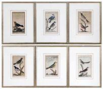 """Sechs alt-kolorierte Kupferstiche aus """"Herren von Buffons Naturgeschichte der Vögel"""", um 1770jeweils"""