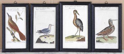 Vier alt-kolorierte Kupferstiche auf Bütten aus Herren von Buffons Naturgeschichte der Vögel,