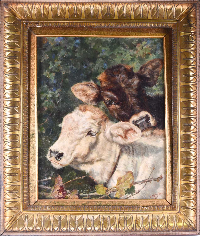 Lot 44 - Eduardo Matania (1849-1929) Italian, A study of two young calves in a rural setting, signed E.