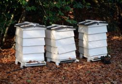 Three white painted wood beehives