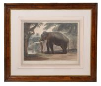 After Samuel Daniell (British 1775-1811)The Elephant