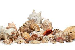 ϒ A collection of assorted decorative seashells