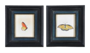 Continental School (19th century) A set of four butterfly studies