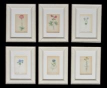 A set of twelve botanical prints
