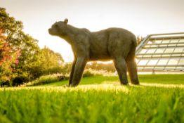 λ Kendra Haste MRSS, Brown Bear (Grizzly), 2015