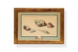 Willem van Leen, (Dutch 1753 - 1825), Sea Shells