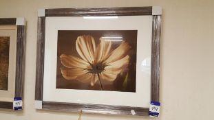 3x Framed prints