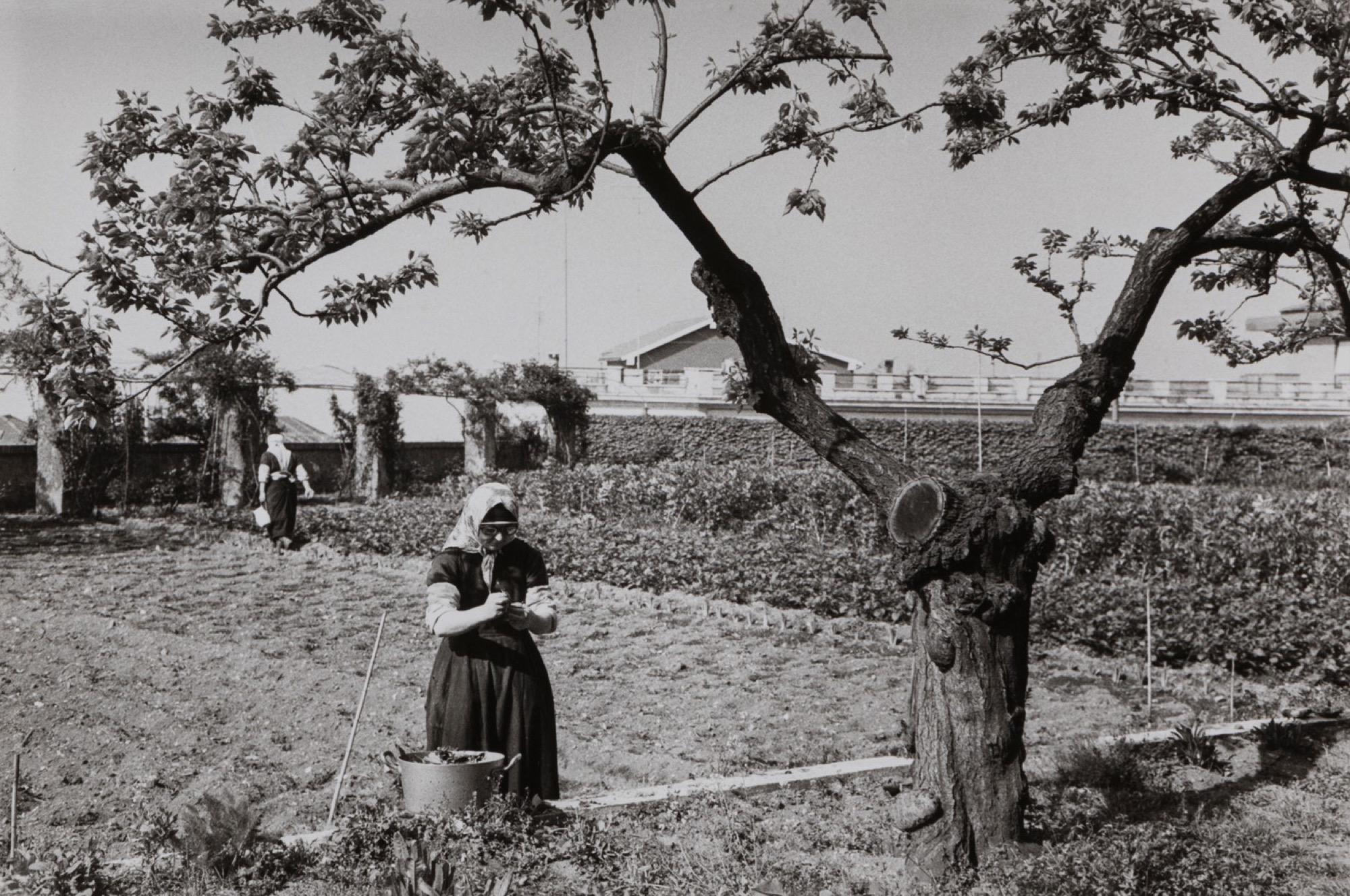 Edouard Boubat (1923-1999) - Untitled (Countrywoman), years 1950 - Two gelatin [...] - Image 3 of 3