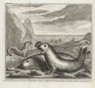 Voyages.- California.- Shelvocke (Capt. George) A Voyage round the World by the Way of the Great …