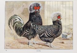 Lewer (S. H., editor) Wright's Book of Poultry, 1910.