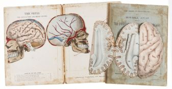 Anatomy.- Witkowski (G.J.) Human Anatomy and Physiology: A Movable Atlas, 4 parts only, …