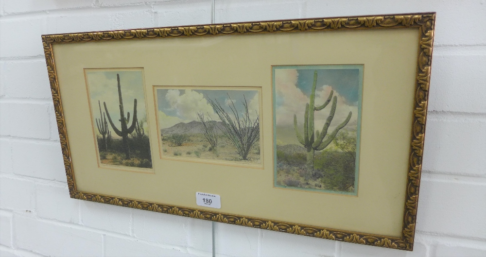 Lot 180 - A group of three Arizona cactus coloured prints, contained within a single frame