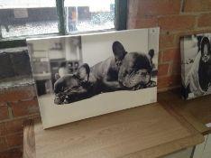 Big Box Art,'Two Black French Bulldogs Dog' Framed Photographic Print RRP -£44.99 (JKT39409 -15055/