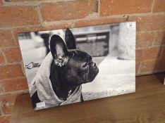 BULL DOG PICTUREARTG3895 -15055/30)
