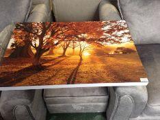 Magnolia Box,Wakehurst Place, Sussex - Autumn - Early Morning Sunlight Illuminates Japanese Maple