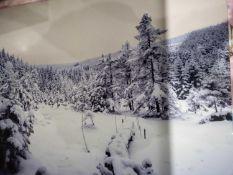Wild Winter Canvas