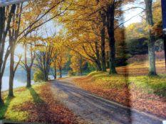 Sunny Park Canvas