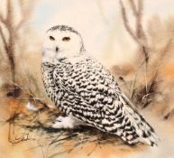 Trevor Stark, study of an owl, signed watercolour,