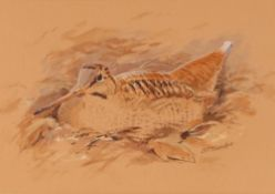 S T Tunder, study of nesting woodcock, signed wate
