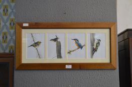Pine Framed Print - Bird Life