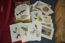 Large Quantity of Small Assorted Prints