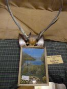 Johnstone Collection: Oil Painting of Eileen Doran Castle, and a Mounted Pair of Antlers