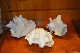 Three Large Shells