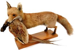 A 20thC taxidermied fox group with dead pheasant to the mouth, on a rectangular wooden plinth base,